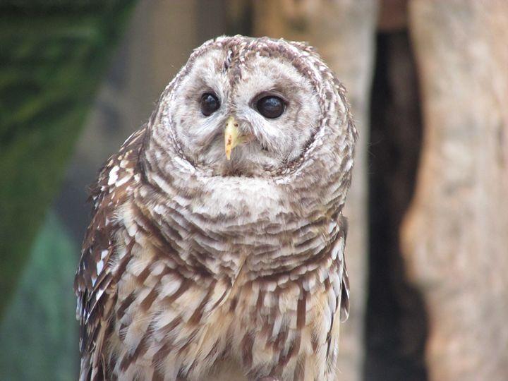 Owl Pose - Michael