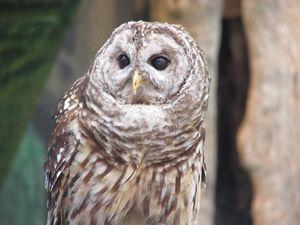 Owl Pose