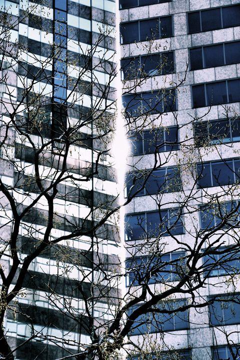 Split the Heavens - Julie Maxwell