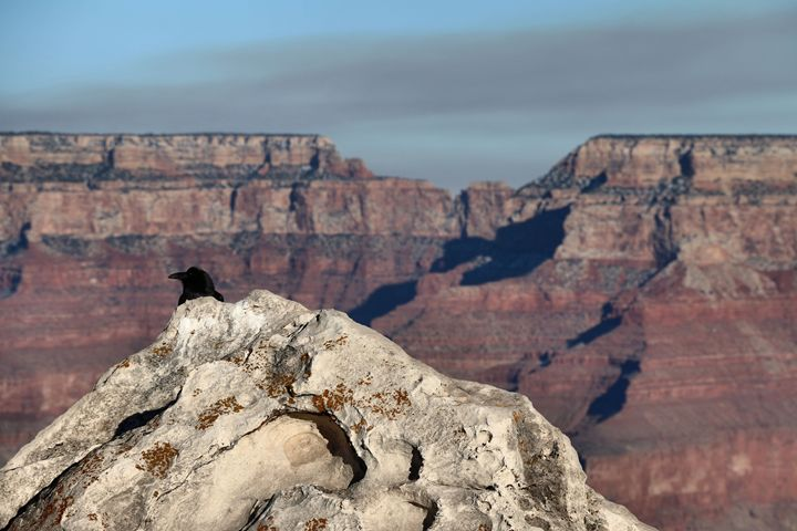 Lost in Grand Canyon - Julie Maxwell