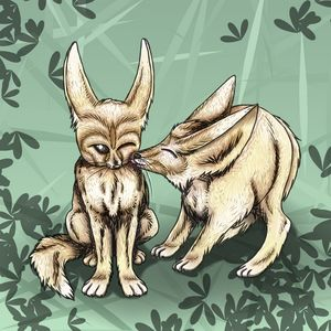 Nuzzling Fennec Foxes