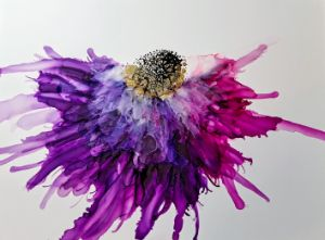 Pink and Purple cone flower