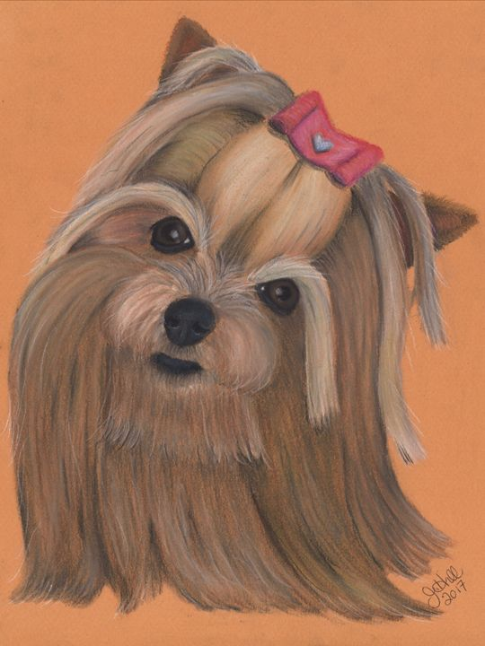 Yorkie - Sketchedout12