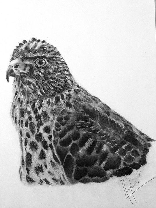 Amazing Falcon - Expressions