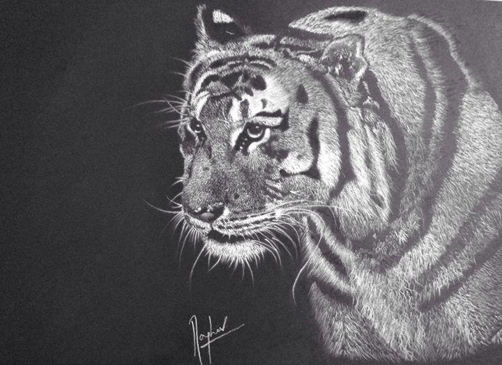 Siberian Tiger - Expressions