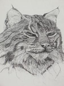 Lynx - PlokimjuArt