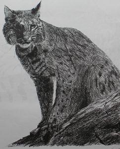 Bobcat watching - PlokimjuArt