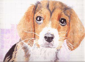 Beady eyed beagle