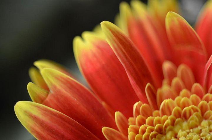 Flower Burst - eJAY