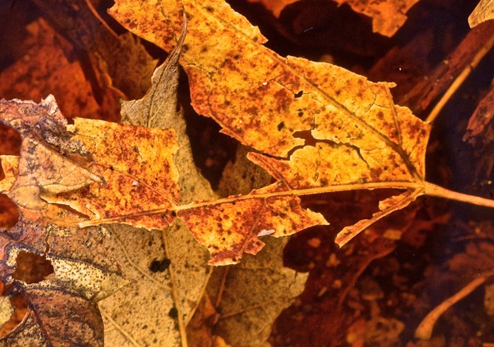 Broken Leaves - Mark Scott Thompson