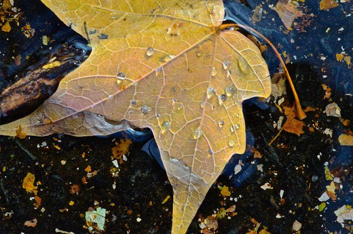 Crying Leaf - Mark Scott Thompson