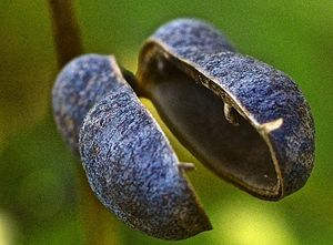 Prairie flower pod - Mark Scott Thompson