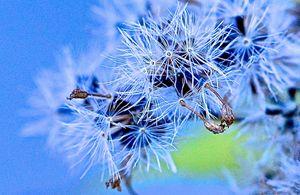 Weed Fireworks - Mark Scott Thompson