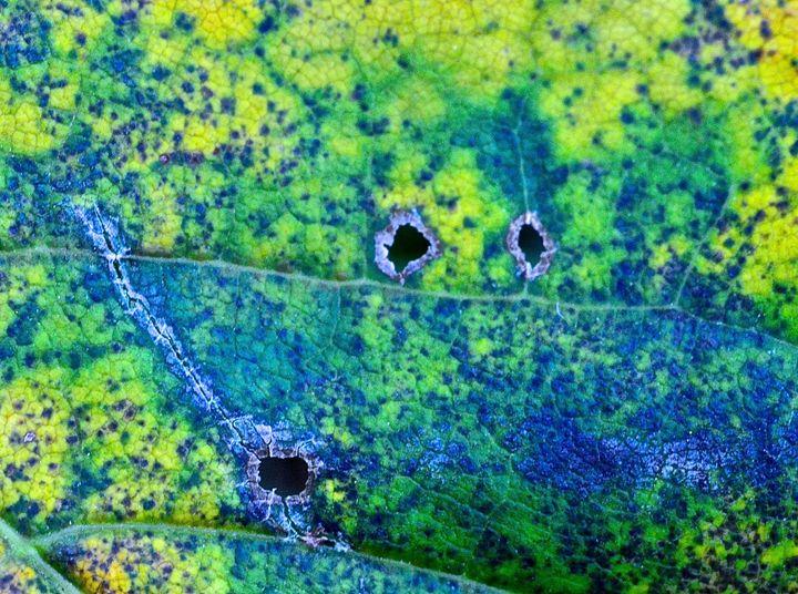 Aerial View Leaf - Mark Scott Thompson