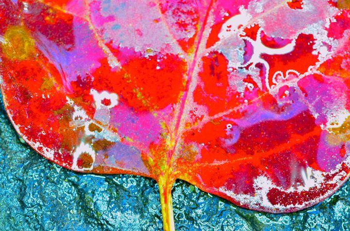 Leaf dancer - Mark Scott Thompson