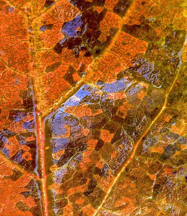 Leaf farms - Mark Scott Thompson