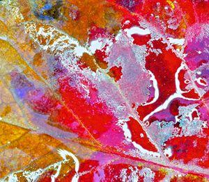 Leaf rivers1