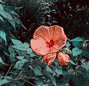 Hibiscus Haven