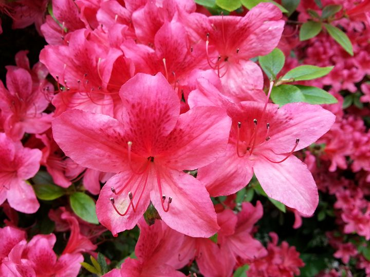 Pretty Pink Flower - Photo Life Generation