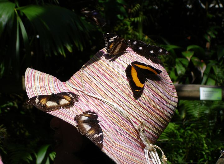 Butterfly hat - Photo Life Generation