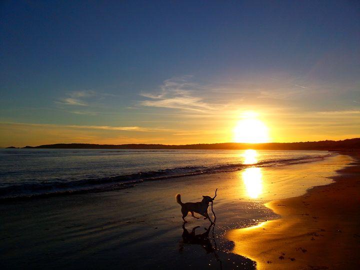 Happy dog on a sunset evening - Photo Life Generation