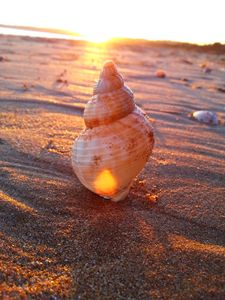 Sun fire Seashell