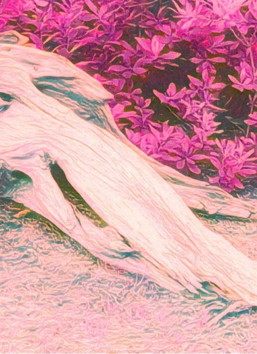 Old Man Snoring - Helen DiQuinzios Digital Art