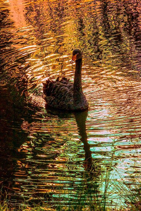 swan lake - A Vision