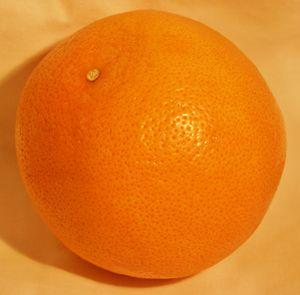 Fresh Orange 1
