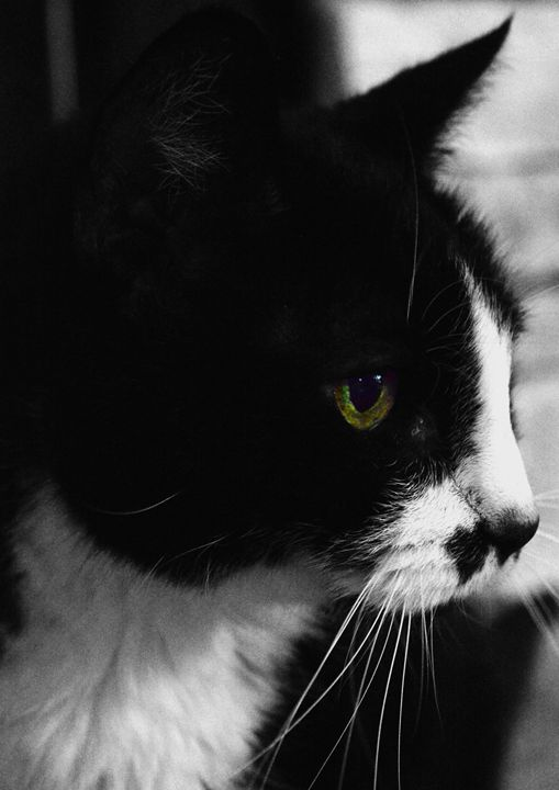 Black and White Cat with Color - Timeless Art On Canvas