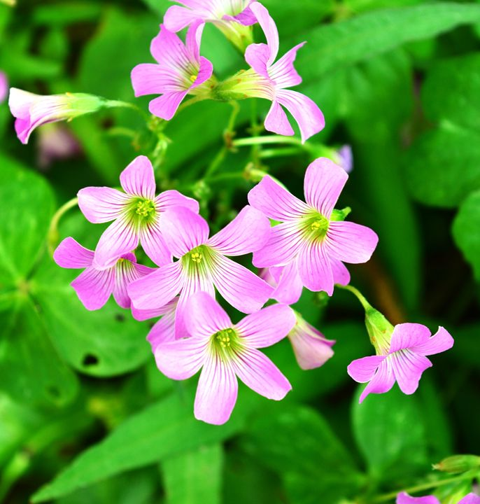 Pink purple green and beautiful - Timeless Art On Canvas