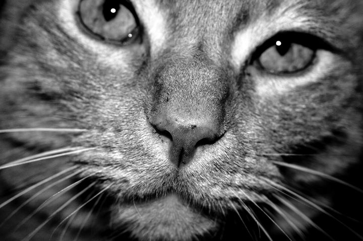 Tabby Cat No. 3 - Timeless Art On Canvas