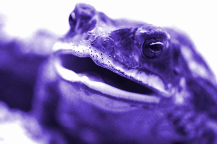 Purple Frog - Timeless Art On Canvas