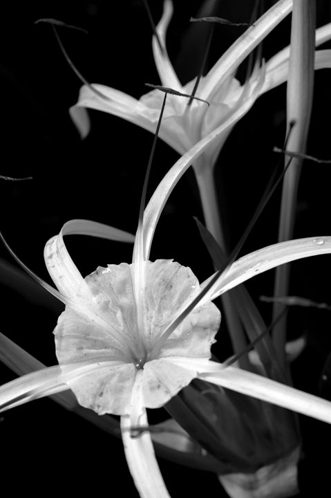 Black and White Modern Flowers - Timeless Art On Canvas