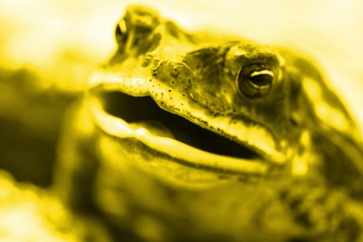 Yellow Frog - Timeless Art On Canvas