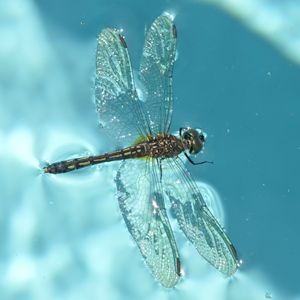 Dragonfly in Full View - Timeless Art On Canvas