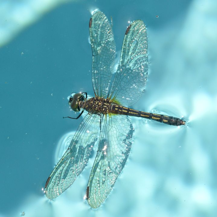 Dragonfly in Full View No.2 - Timeless Art On Canvas