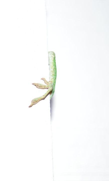 Lizards - Timeless Art On Canvas