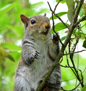 Happy Squirrel - Timeless Art On Canvas