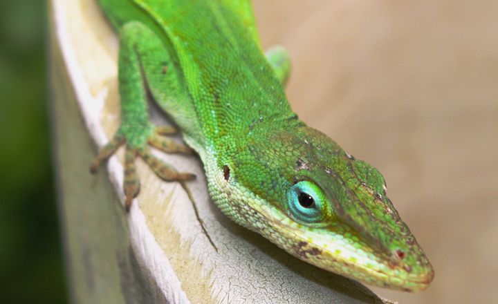 Lizard in full color - Timeless Art On Canvas