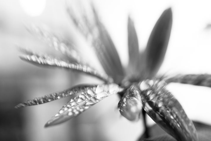 abstract flower 6 - Collective Content