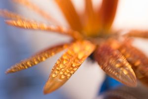 abstract flower 13