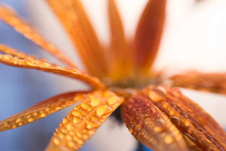 abstract flower 24 - Collective Content