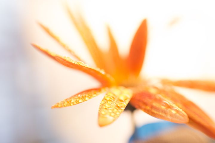 abstract flower 31 - Collective Content