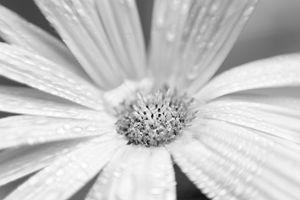 bright flower 5