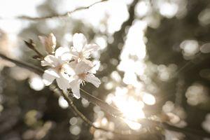 bright flowers 5