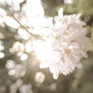 bright flowers 1