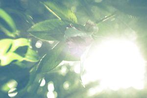 sun tree 1