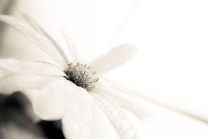 white & white - Collective Content