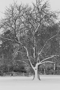 The Tree on the Green